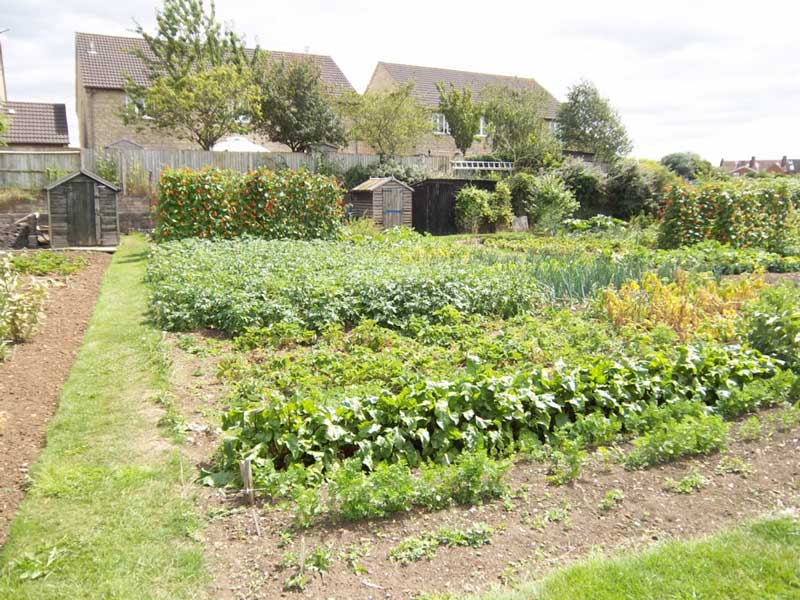 Allotments from Melksham Town Council